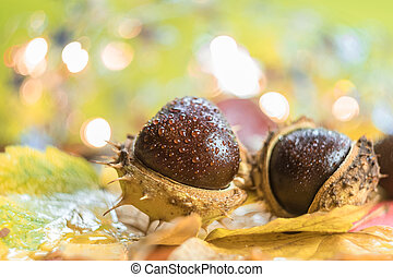 Autumn background with chestnuts. Shallow depth of field