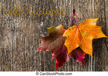 Autumn background with Hello Autumn letters and autumn leaves.
