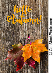 Autumn background with Hello Autumn letters and autumn leaves