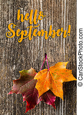 Autumn background with HELLO SEPTEMBER letters and autumn leaves