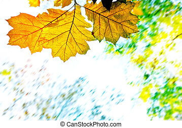 Autumn background with leaves on the sky