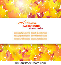 Autumn background with maple and other leaves. White text box. Vector illustration.