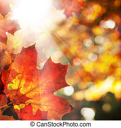 Autumn Background with Maple Leaves. Abstract Fall Border with Sun Ligth