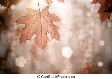 Autumn background with maple leaves. Shallow depth of fields