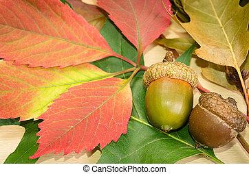 Autumn background with oak