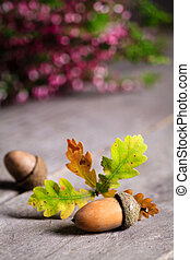 Autumn background with oak acorn and leaves.