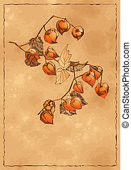 Autumn background with orange physalis - Vector sketch of...