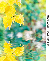 Autumn background with yellow birch leaves reflected in a water