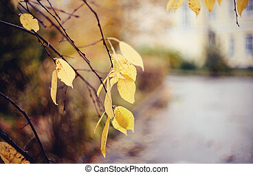 Autumn background with yellow leaves on branches.