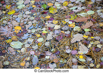 Autumn background. Yellow fallen leaves in the water. Forest leaf texture