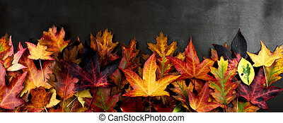 AUTUMN BACKGROUNDS, FRAME OR BORDER OF COLORFUL FALL LEAVES. HIGH ANGLE VIEW AGAINST DARK BACKGROUND.