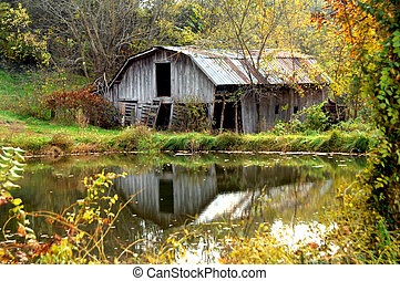 Abandoned wooden barn is reflected in a pond. Autumn foliage surrounds pool and barn with gold. Weathered wood and tin roof are cracked and in need of repair.