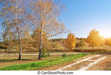 Autumn birch in park