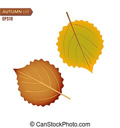 Autumn Birch leaf isolated on a white background. Vector illustration