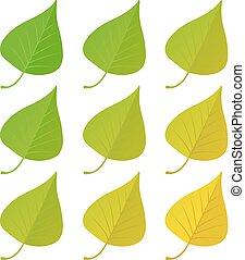 Autumn birch leaves set