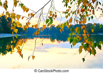 Autumn birch tree leaves water