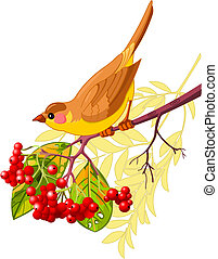 Cute bird sitting on mountain ash branch. Isolated on white background