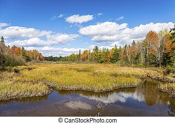 Autumn Bog and Fall Colors - Ontario, Canada