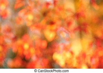 Autumn bokeh background - Fall bokeh background of autumn...