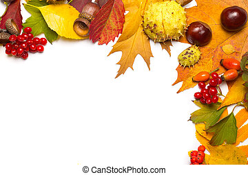 autumn border - acorn, chestnut, viburnum, rowan, briar and ...