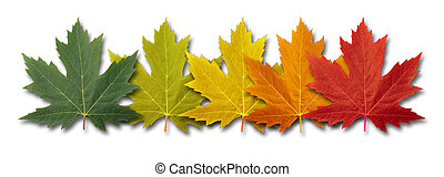 Autumn Border Element - Autumn border element Leaves with...