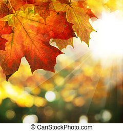 Autumn Border of Maple Leaves on Abstract Sunny Bokeh Background