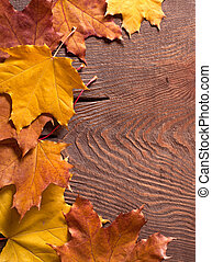 Autumn border - the colorful autumn maple leaves on wood