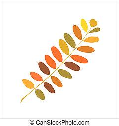 Autumn branch of acacia