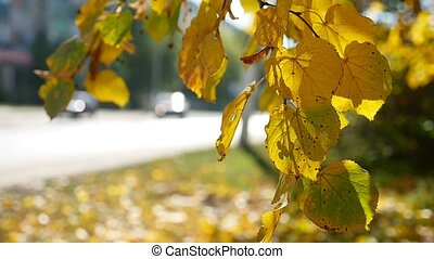 autumn branch swaying tree in the wind in the background Road traffic Car nature