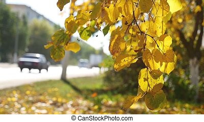 autumn branch tree swaying in the wind in the background Road traffic Car nature