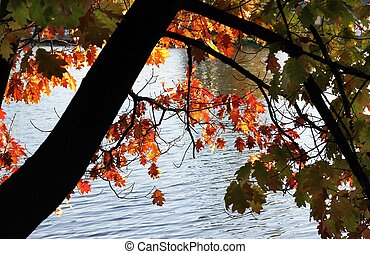 Autumn branch with leaves bending over the water