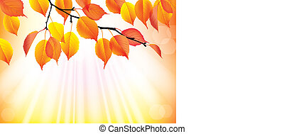 Autumn branch with yellow leaves background