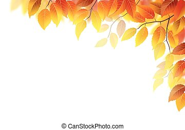 Autumn branches with leaves on white, vector illustration