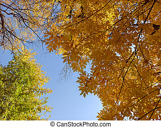 autumn branches with leaves on a blue sky background. Beautiful
