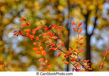 branches with red leaves