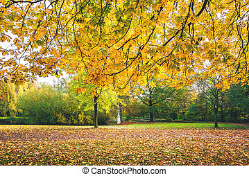 Autumn branches with yellow leaves
