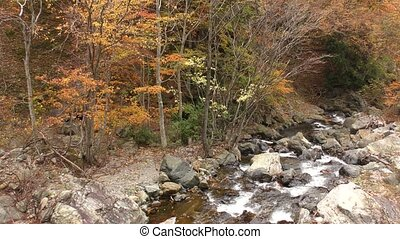 Autumn brook - Brook flowing among many stones beside trees...