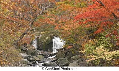 Autumn brook - Brook surrounded by autumn leaves in Minakami...