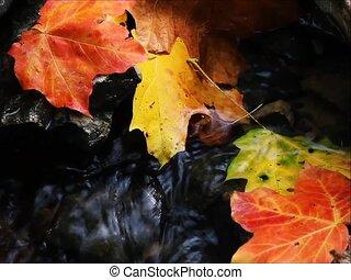Autumn Brook Loop SD