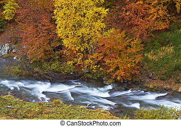Autumn brook with mini waterfalls flowing in the national ...