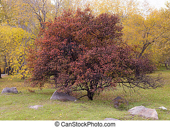 Autumn bush with red leaves