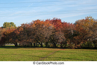 Autumn bushes, red and yellow on background of sky