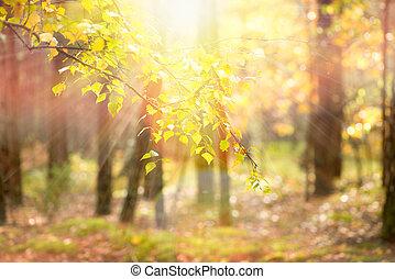 autumn., cadere