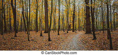 Autumn calm forest walking path between bare trees. Golden yellow foliage leaf fall.