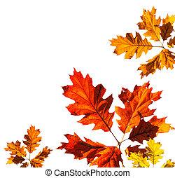 Autumn card on white background