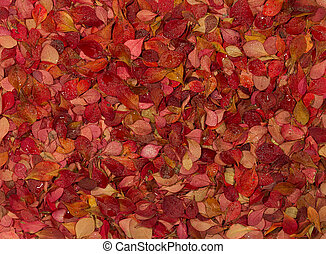 Autumn carpet of colorful leaves on the ground in the park.