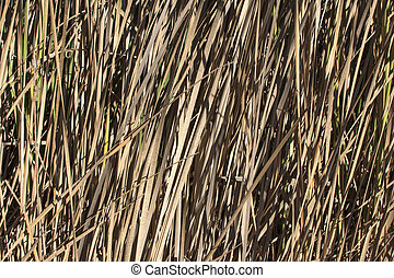 Autumn cattails with dry brown leaves