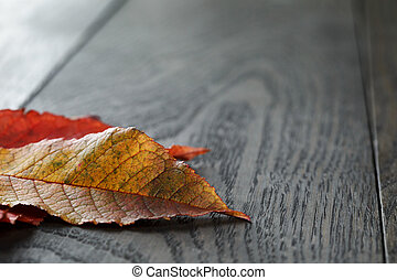 autumn cherry leaves on old oak table