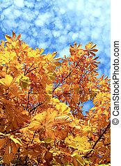 Autumn chesnut tree