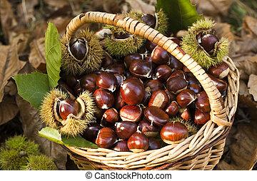 Close up of chestnut harvest in wicker basket